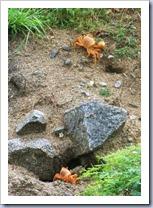 Land crabs